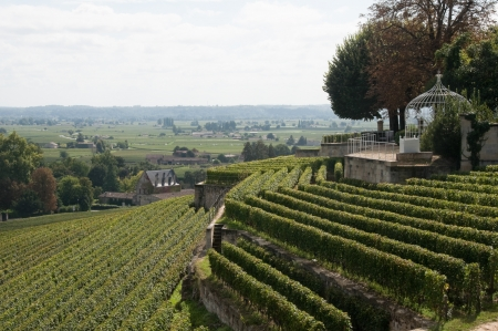historical sites: Vineyard at Saint-Emilion, France