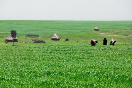 campesino: Los agricultores de las tierras altas de Etiopía Foto de archivo