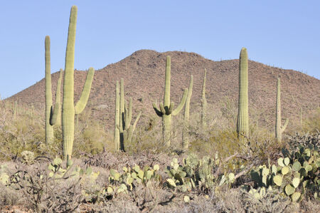 Saguaro National Park, Tucson, Arizona Banco de Imagens - 27576588