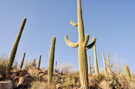 Saguaro National Park, Tucson, Arizona Banco de Imagens - 27576598