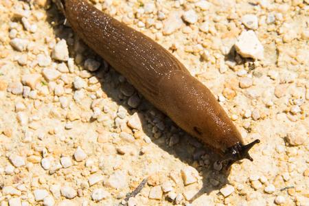 slug: Spanish slug Stock Photo