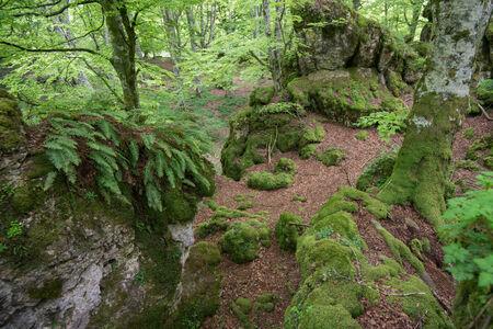 alava: Beech forest, Entzia mountain range, Alava, Spain Stock Photo