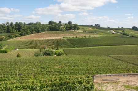 Vineyard at Saint-Emilion, France  photo