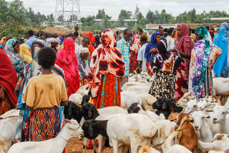 Various ethnic groups ethnic group of the Horn of Africa come to Babile market in Ethiopia to buy and sell cattle