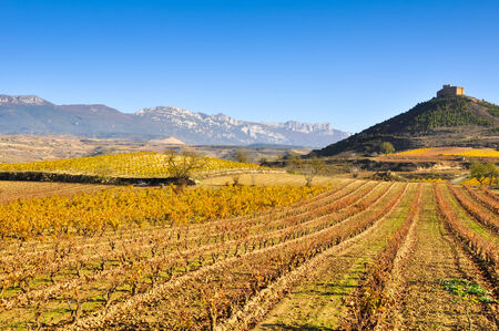 castilla: Vineyards in autumn and Davalillo castle, La Rioja, Spain