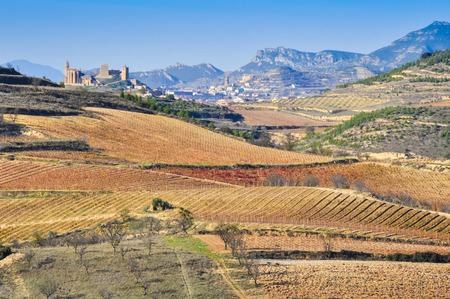Vineyard, San Vicente de la Sonsierra as background, La Rioja photo
