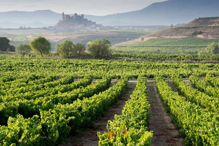 Wijngaard, San Vicente de la Sonsierra als achtergrond, La Rioja