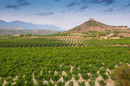 la rioja: Vineyards and Davalillo castle, La Rioja, Spain