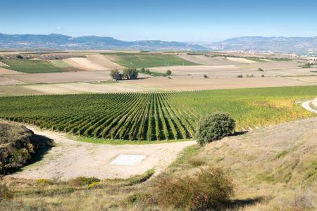 Landscape with vineyard in Autumn, La Rioja, Spain photo
