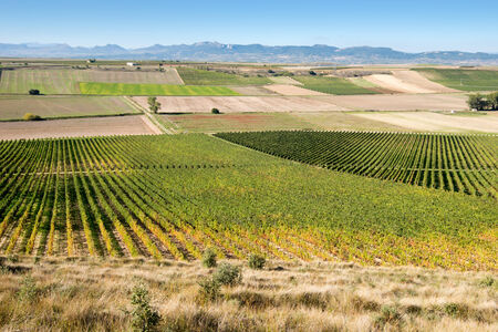 la rioja: Vineyard in Autumn, La Rioja, Spain Stock Photo