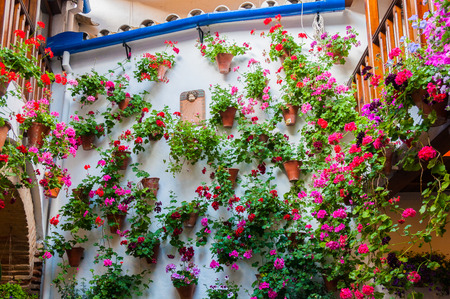 intangible: The Courtyards of Cordoba, Intangible Heritage of Humanity