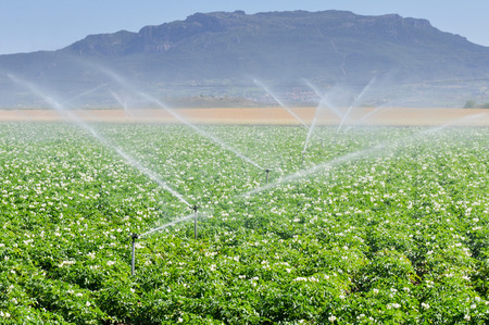 Irrigation sprinklers in a farm field, Spain Foto de archivo