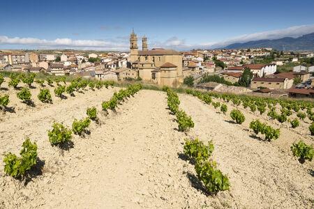 rioja: Vineyard and town of Elciego, Rioja Alavesa, Spain