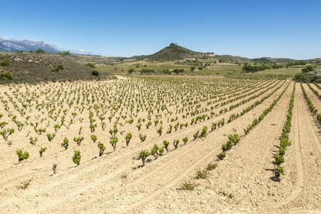 rioja: Vineyards at La Rioja, Spain Stock Photo