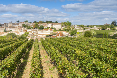 french countryside: Vineyard at Saint-Emilion, France