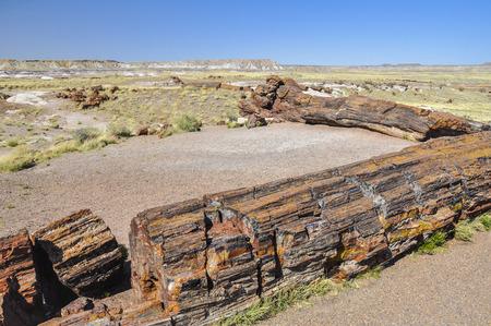 petrified fossil: Petrified logs at Petrified Forest National Park, Arizona Stock Photo