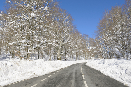 alava: Road through a snowy forest, Basque Country, Spain