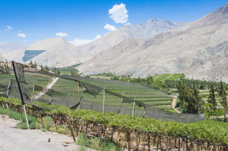 vineyard plain: Vineyards of Elqui valley, Chile