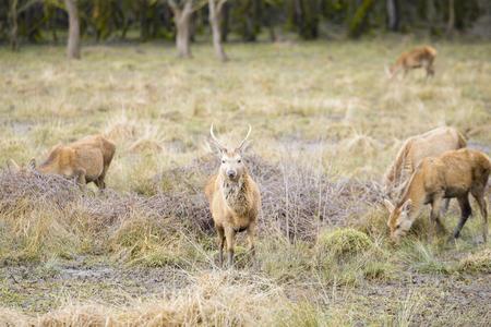 vitoria: Herd of young deer, Salburua park, Vitoria Spain Stock Photo