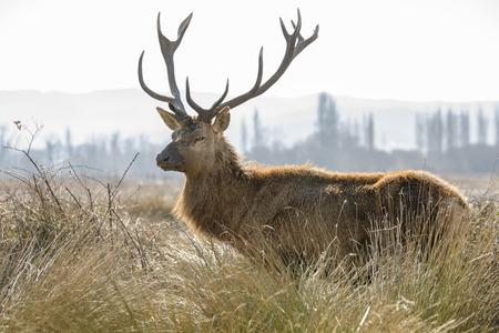 vitoria: Deer at Salburua park, Vitoria, Spain