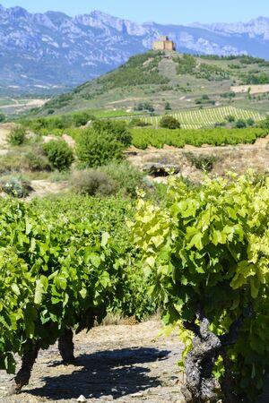 rioja: Vineyard with Davaillo castle as background, La Rioja