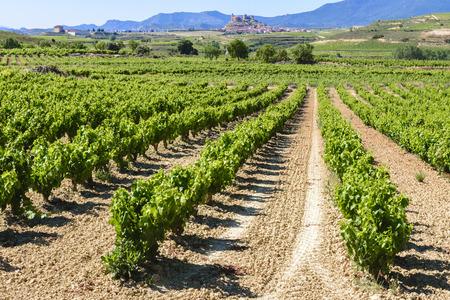 vi�edo: Vi�edo, San Vicente de la Sonsierra como fondo, La Rioja, Espa�a