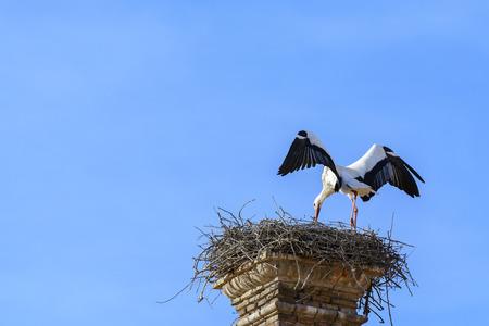 collegiate: Stork lands on the nest, San Miguel Collegiate Church, Alfaro, Spain Stock Photo
