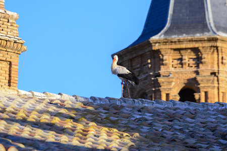 collegiate: Stork in San Miguel Collegiate Church, Alfaro, Spain