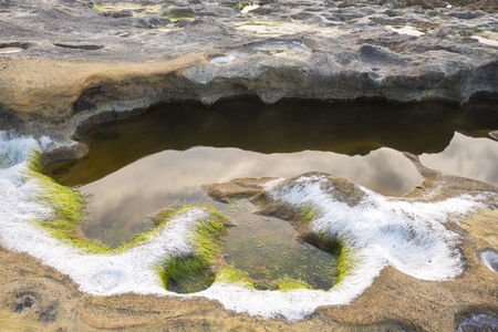 sediments: Seaweed covered by salt at the beach of Fossils, Jaizkibel in Basque Country, Spain Stock Photo