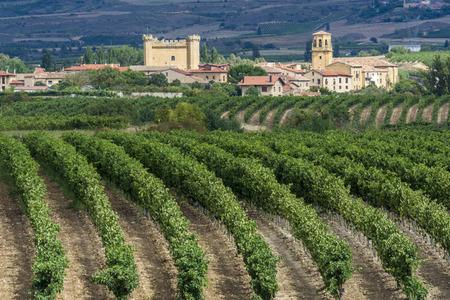 viñedo: Viña, Sajazarra como fondo, La Rioja, España