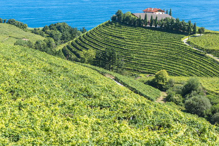 Vineyards and wine cellar with the Cantabrian sea in the background, Getaria, Spain