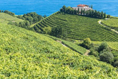 Wijngaarden en wijnkelder met de Cantabrische zee op de achtergrond, Getaria, Spanje
