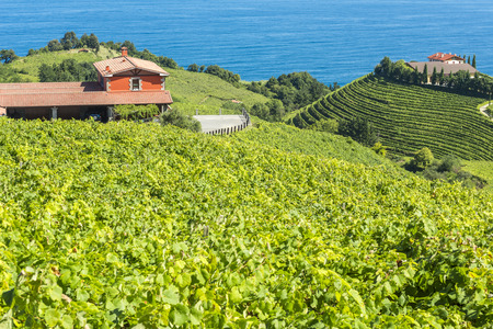 cantabrian: Vineyards and wine cellar with the Cantabrian sea in the background, Getaria, Spain