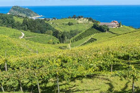 viñedo: Viñedos y bodega de vinos con el mar Cantábrico en el fondo, Getaria, España Foto de archivo