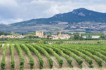ブドウ園、Sajazarra、ラ ・ リオハ州、スペインの背景として