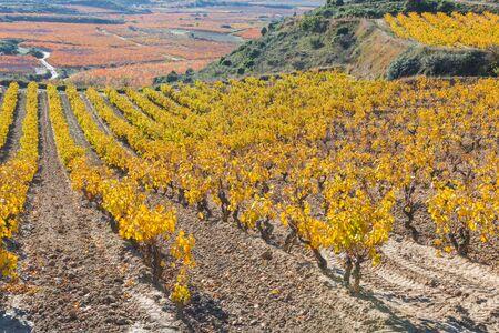 alava: Vineyards in Autumn, La Rioja, Spain