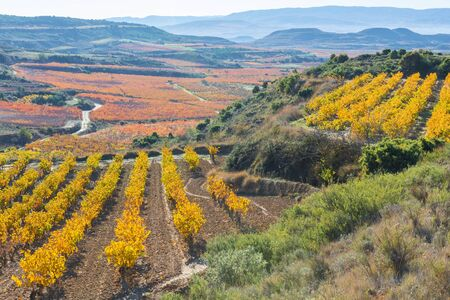 la rioja: Vineyards in Autumn, La Rioja, Spain