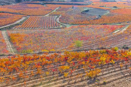 rioja: Vineyards in Autumn, La Rioja, Spain
