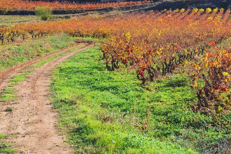 alava: Vineyard in Autumn, La Rioja, Spain Stock Photo