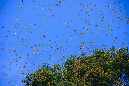 the biosphere: Monarch Butterfly Biosphere Reserve, Michoacan,Mexico