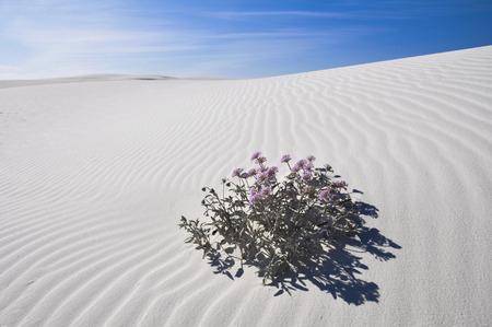 inhospitable: White Sands National Monument, New Mexico, USA Stock Photo