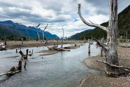 desert ecosystem: Dead forest in Patagonia, Chile Stock Photo