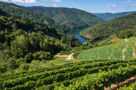 Vineyards along the River Minho, Ribeira Sacra, Lugo, Spain Stock Photo