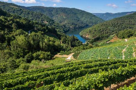 Vineyards along the River Minho, Ribeira Sacra, Lugo, Spain 版權商用圖片