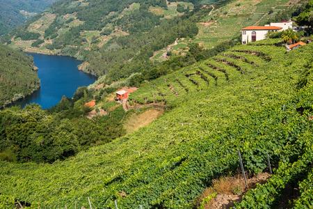 Winnice wzdłuż rzeki Minho, Ribeira Sacra, Lugo, Hiszpania Zdjęcie Seryjne