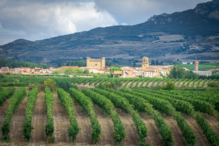 Weinberge mit Dorf Sajazarra als Hintergrund, La Rioja, Spanien