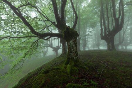 Belaustegi beech forest, Gorbea Natural Park, Vizcaya, Spain