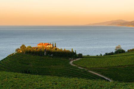 Txakoli white wine vineyards with Cantabrian sea in the background, Getaria, Spain Stockfoto