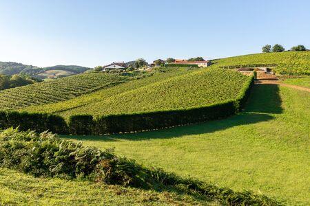 Txakoli White Wine Vineyards, Getaria, Basque Country, Spain Stockfoto