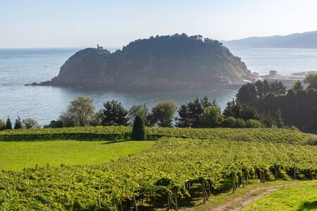 Vineyards with the Cantabrian Sea in the background, Getaria, Spain